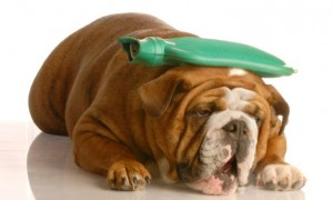 golpe-calor-perro-1200-668x400x80xX