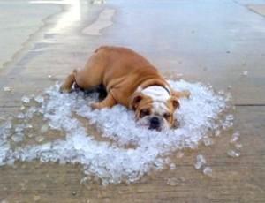 mascotas-al-calor