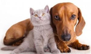 deko_mascotas_184-castracion-gatos-perros-668x400x80xX