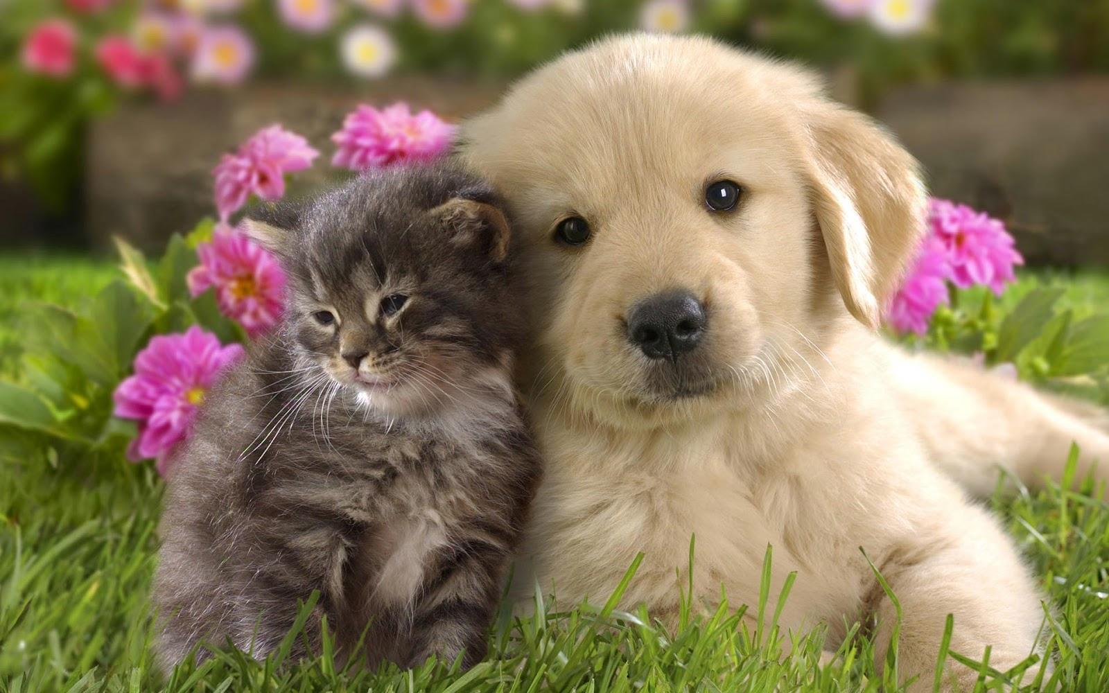 perros y gatos 3