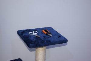 corte de uñas en gato, tijeras, alicates